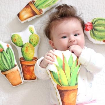 Hochet cactus